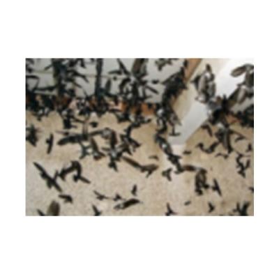 Phân chim yến